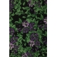 LuLaRoe Adeline (12) purple flowers on black